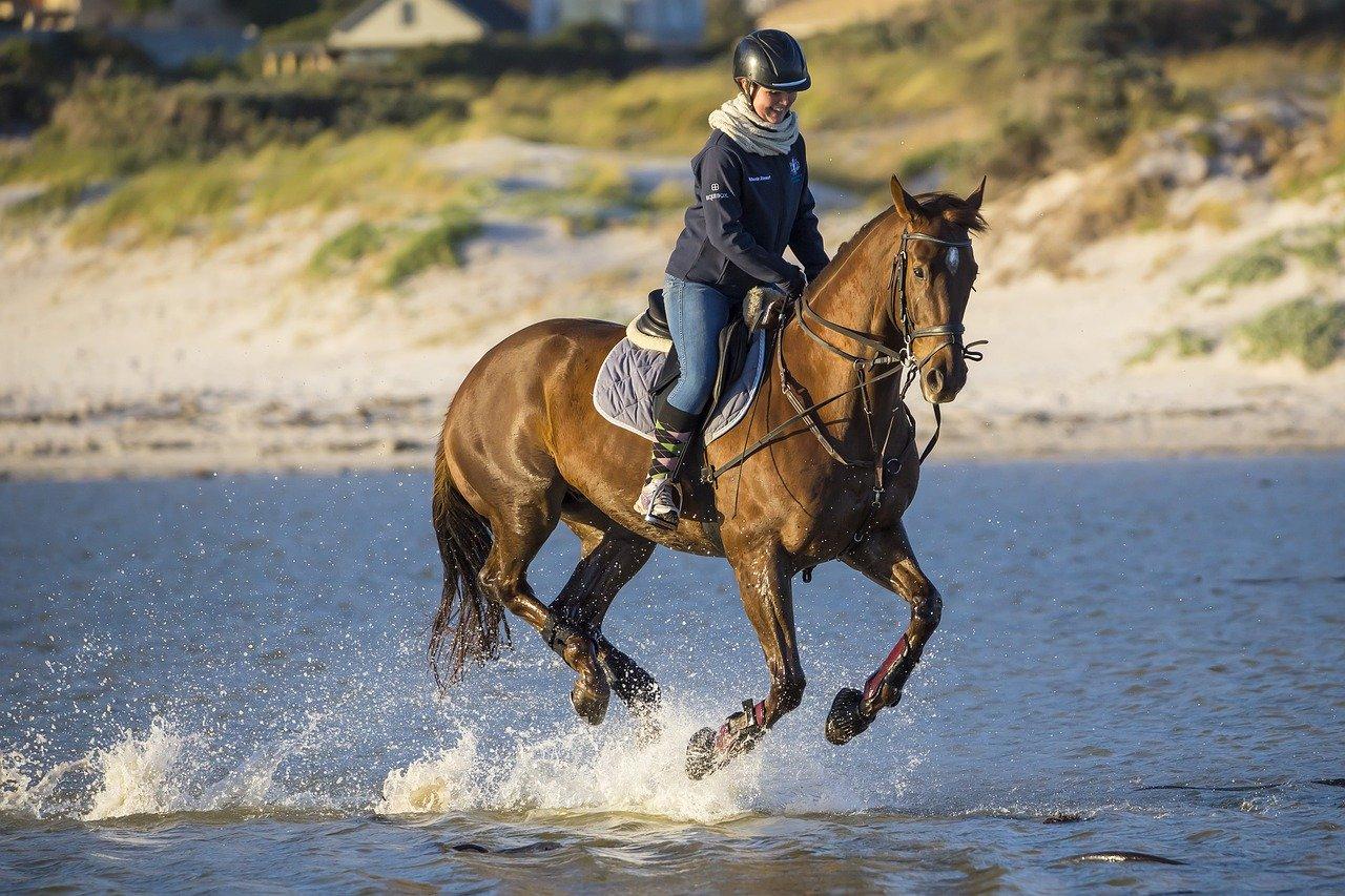 Hale - idealny obiekt dla koni
