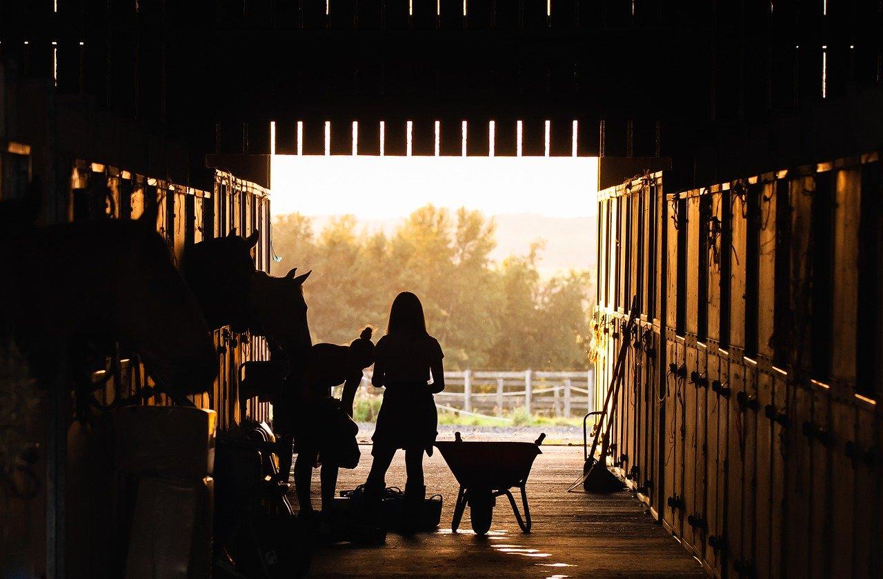 Nowoczesne hale pod ujeżdżalnie dla koni
